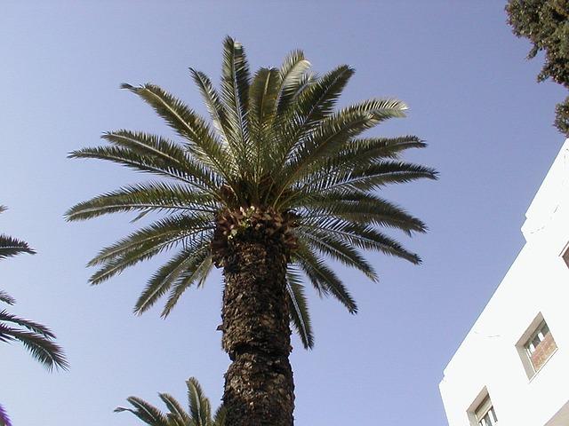 palmy před budovou