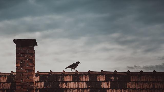 pták na střeše