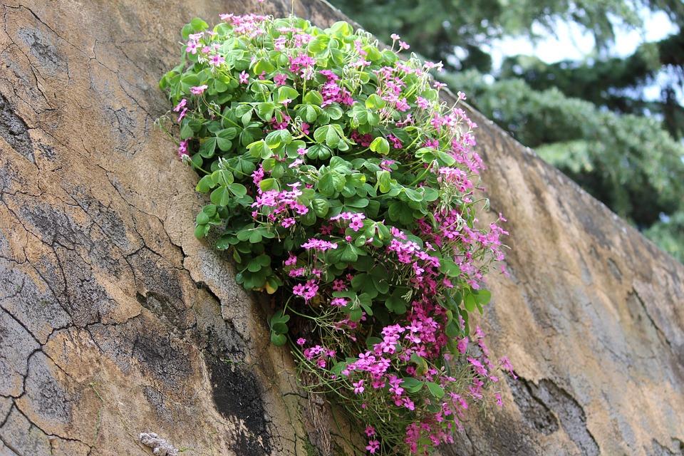 zeď s květinou